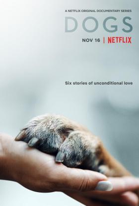 愛犬情深第一季海報