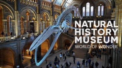 英國自然曆史博物館神奇世界海報