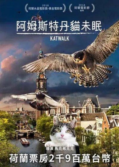 阿姆斯特丹貓未眠電影海報劇照