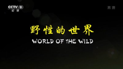 野性的世界海報